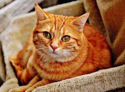 un chat malade dans son panier