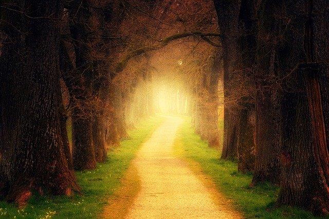 un chemin s'éclaircit dans la forêt sombre