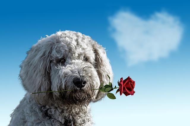 Un chien tenant une rose dans sa gueule pour demander pardon
